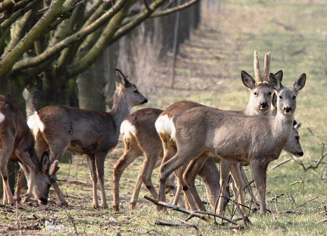 Łowiectwo w Polsce po niemiecku – jagd in Polen
