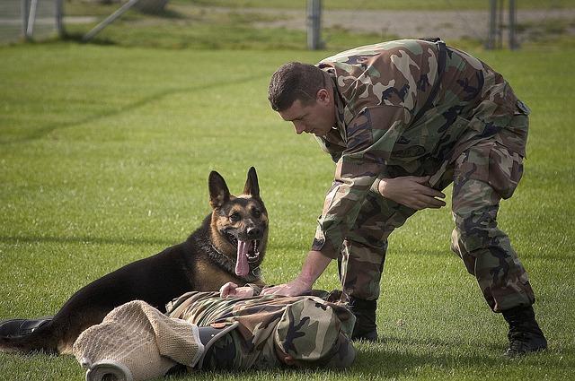 Szkolenia dla zwierząt