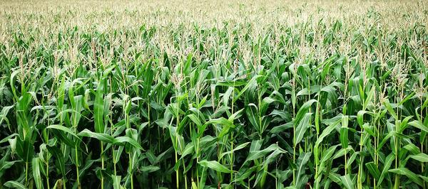 Najlepsze rozwiązania z nawożeniem upraw