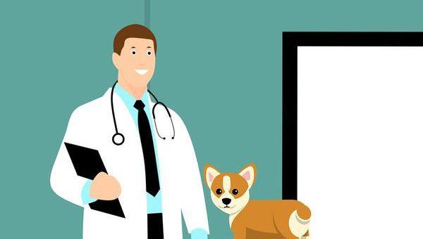 Zalecane szczepienia dla wszystkich psów
